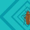 蟑螂药可以说是目前最为有效的灭蟑手段了