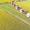 关于加快农业保险高质量发展的指导意见