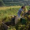 宜宾将农产脱贫致富农文旅融合产业发展乡村振兴建设典型村为宣传主体