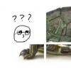 科技在线:科普抖音很火的乌龟六张图怎么玩及抖音变老的特效视频怎么拍