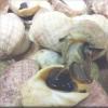 海蜗牛化合物可降低癌症风险